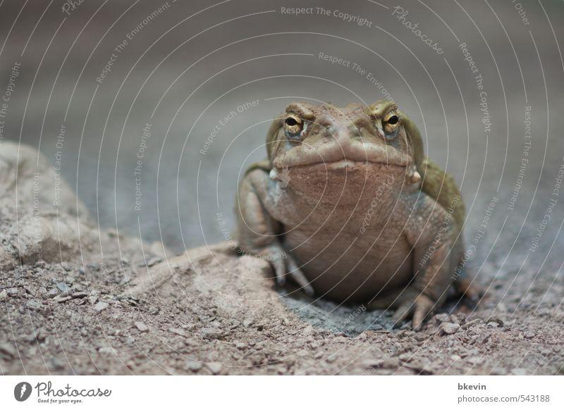 Beautiful Green Calm Animal Cold Sadness Gray Natural Wild animal Wait Cool (slang) Grief Zoo Fat Boredom Frog