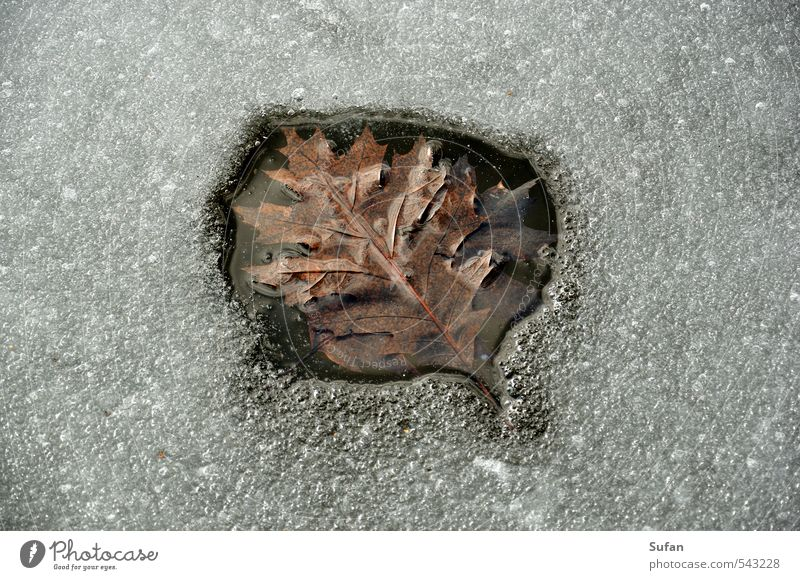 hot leaf Winter Nature Water Sunlight Spring Autumn Beautiful weather Ice Frost Leaf Lakeside Pond Cold Wet Warmth Brown Gray Black White Frozen surface