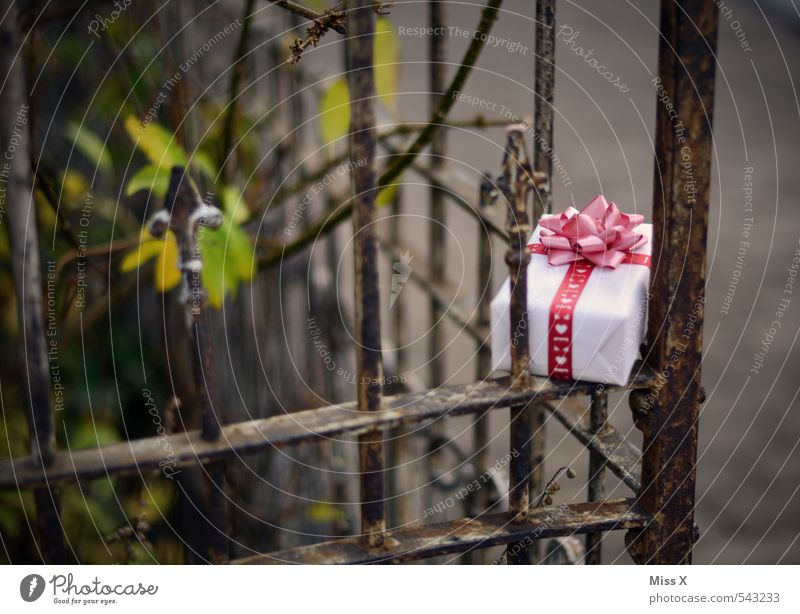 Christmas & Advent Love Emotions Happy Feasts & Celebrations Garden Moody Living or residing Decoration Birthday Heart Joie de vivre (Vitality) Gift Romance