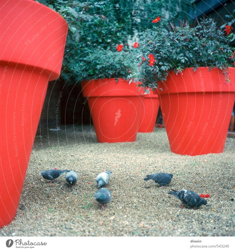 City Plant Red Animal Bird Gloomy Bushes Places Group of animals Concrete Downtown London Pigeon England Flowerpot Great Britain