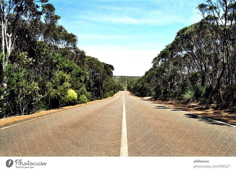 Road on Kangaroo Island Australia Kangaroo island Horizon Eucalyptus tree Vacation & Travel Street Far-off places bush Freedom external name Landscape