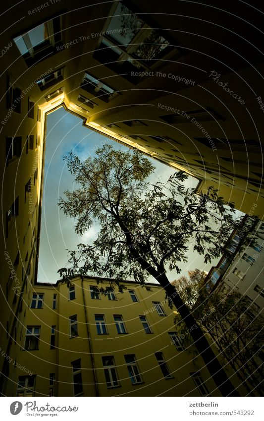 Sky Tree Clouds House (Residential Structure) Window Autumn Berlin Facade Perspective Tree trunk Apartment Building Narrow Tower block Backyard