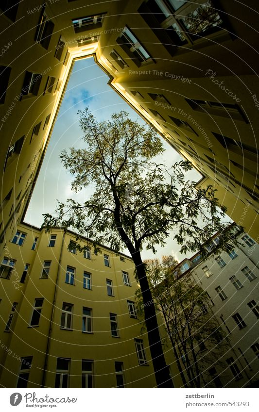 Sky Green Plant Tree Clouds Window Autumn Berlin Living or residing Perspective Longing Tree trunk Narrow Backyard Prefab construction Tenant