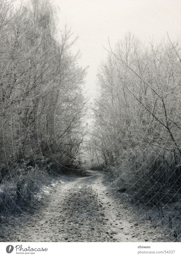 White Tree Winter Forest Dark Cold Snow Sadness Lanes & trails Fog Avenue Alley Uncomfortable