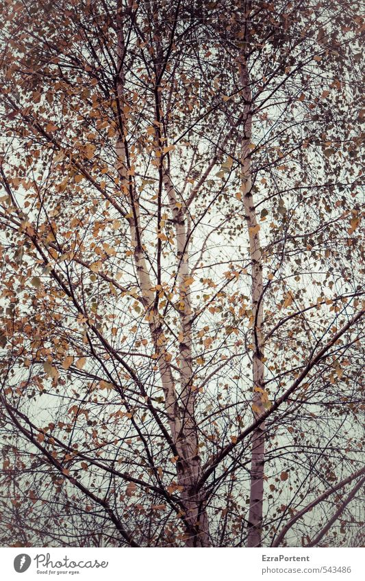 Sky Nature Beautiful White Plant Sun Tree Landscape Leaf Forest Yellow Environment Autumn Wood Garden Weather