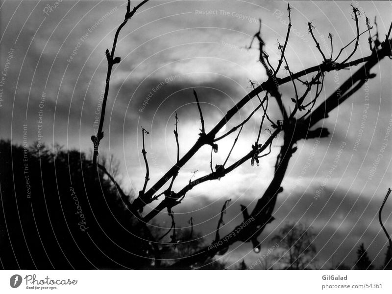 The sun is hiding Dark Bad weather Bushes Tree Black White Clouds Apocalypse Sky weaving Black & white photo Sun Hide