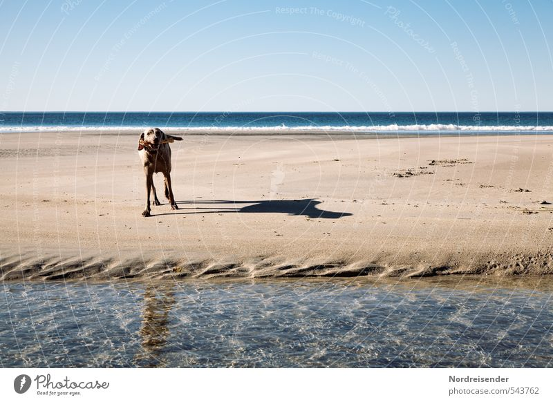 Dog Water Summer Sun Ocean Landscape Joy Animal Far-off places Beach Playing Freedom Sand Horizon Waves Fresh