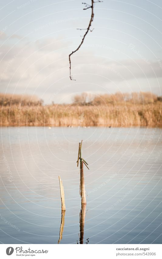 At the lake Nature Landscape Water Sky Autumn Beautiful weather Plant Twig Lakeside Pond Line Thin Simple Long Funny Natural Blue Brown Calm Curiosity Humble