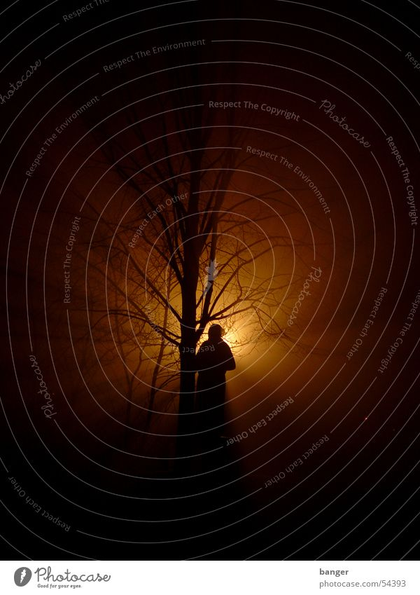 Clara at Zetkin Park Night Back-light Tree Monument Cinema Fog Light (Natural Phenomenon) clara zetkin Snow