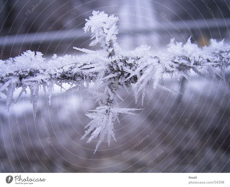 barbed wire Barbed wire Cold Winter Frost Ice Crystal structure Snow
