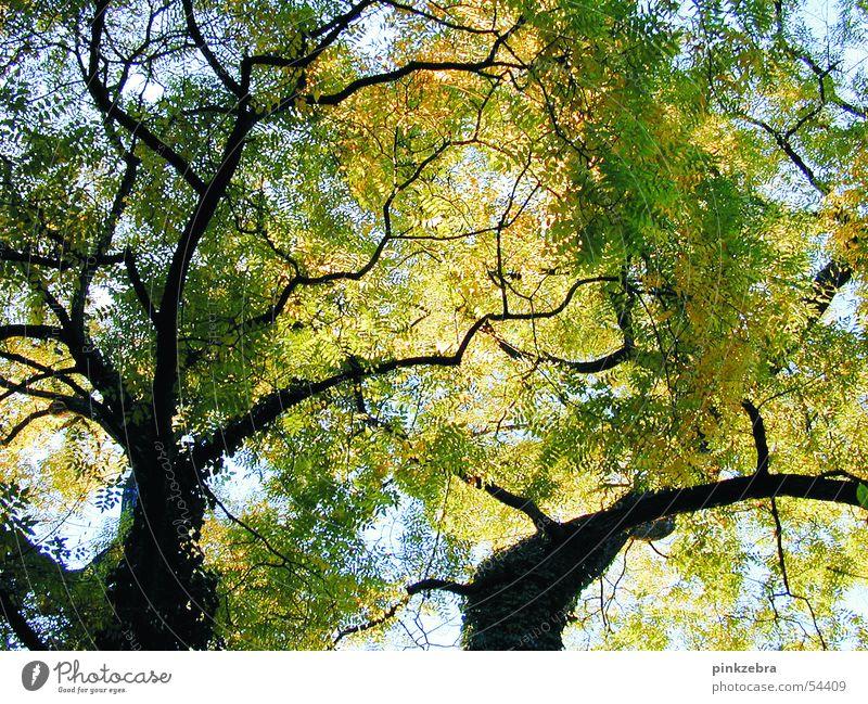 Sky Tree Green Blue Calm Leaf Peace
