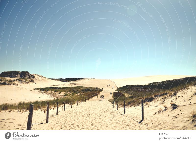 Dunes of Leba Vacation & Travel Tourism Trip Adventure Expedition Summer Summer vacation Sun Beach Environment Nature Landscape Sand Cloudless sky Sunlight