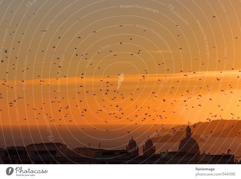 evening hour Marseille Port City Free Yellow Gold Orange Black Calm Idyll Flock of birds Bird Dusk Provence Contemplative Church spire Silhouette Horizon