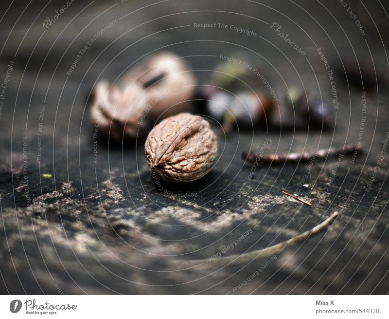 walnut Food Fruit Nutrition Nature Autumn Tree Brown Walnut Nutshell Wood Annual ring Still Life Hard Colour photo Subdued colour Close-up Structures and shapes