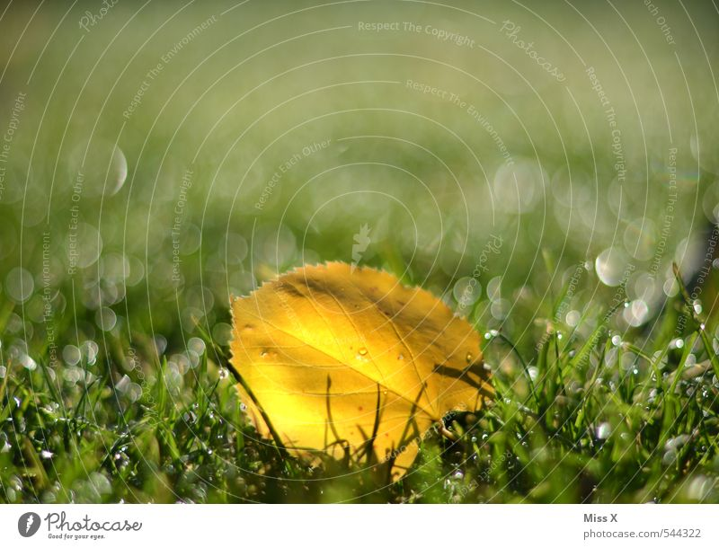 Leaf Yellow Meadow Autumn Grass Garden Rain Glittering Beautiful weather Wet Drops of water Lawn Autumn leaves Dew Autumnal Autumnal colours