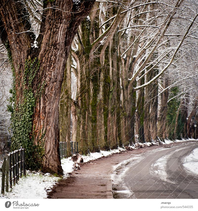 avenue Environment Nature Elements Winter Climate Ice Frost Snow Plant Tree Avenue Freiburg im Breisgau Town Transport Traffic infrastructure Street Curve