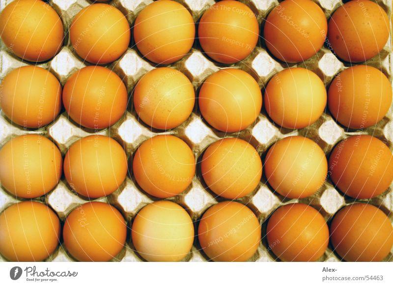 Field Eggs Hill Bird Barn fowl Lie Offspring Embryo Pattern Round Bowl Mountain Row Orange