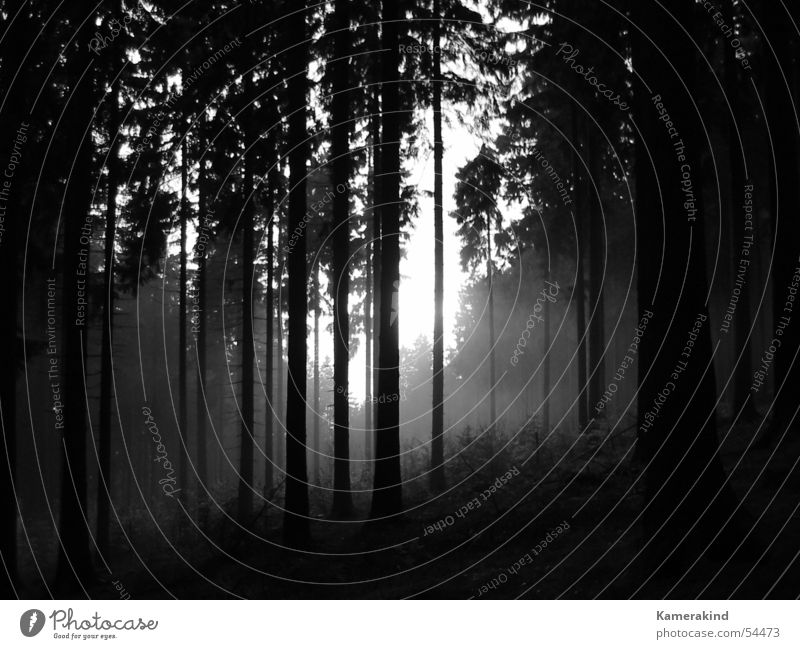 Black Forest Cold Gray Sadness Fog Mystic Clearing Wood flour Sauerland Siegerland Rothaargebirge Mount Kindelsberg