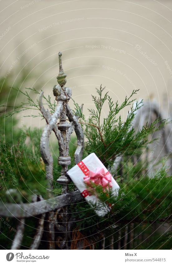 given away Garden Decoration Valentine's Day Christmas & Advent Birthday Bushes Packaging Package Emotions Moody Anticipation Love Infatuation Romance Goodness