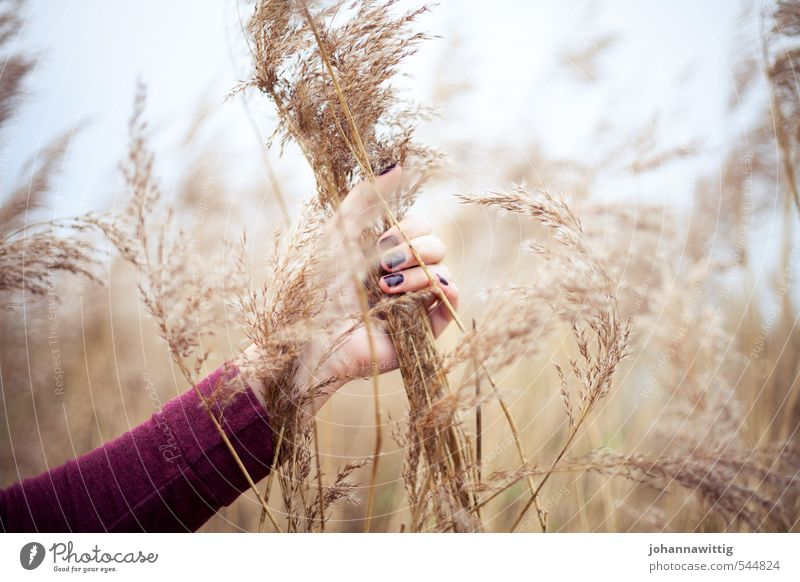 I'm out of here - Feminine Young woman Youth (Young adults) Life Hand 18 - 30 years Adults Environment Nature Air Sunlight Autumn Drought Bushes Wild plant