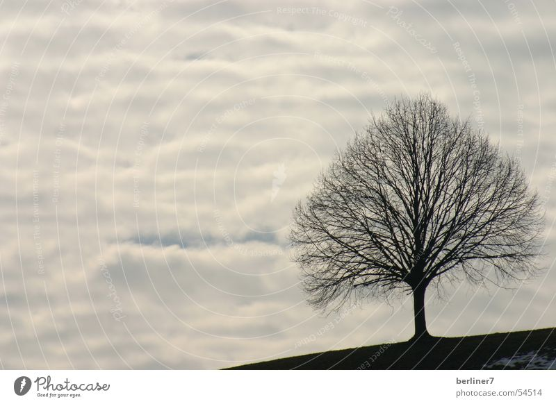 A tree without birds Tree Bird Clouds Gray Slate blue huts Blue Branch Mountain