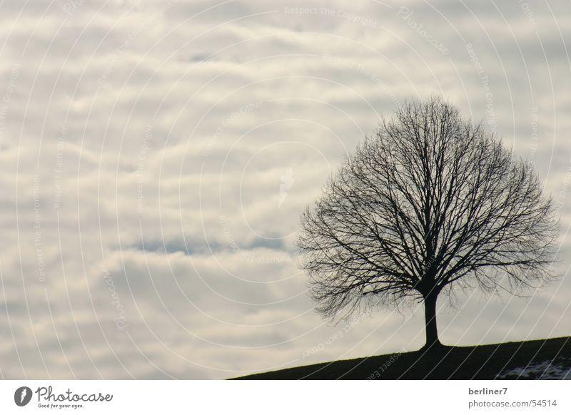 Tree Blue Clouds Mountain Gray Bird Branch Slate blue