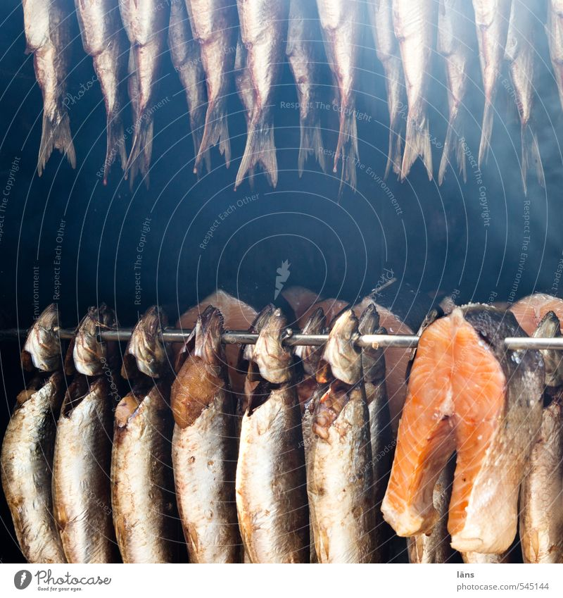 with captured with hung Food Fish Eating Smoke Hang Death Appetite Kipper Fisherman Rod Smoked Exterior shot Deserted