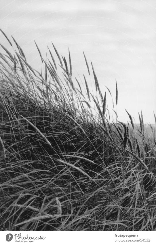 Nature Sky Ocean Beach Vacation & Travel Grass Movement Germany Wind Fresh Europe Beach dune North Sea Mud flats Cover Portrait format