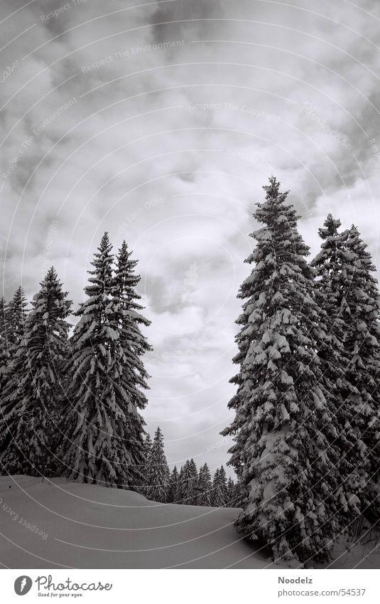 Sky White Tree Winter Clouds Forest Snow Ski resort Hoch-Ybrig