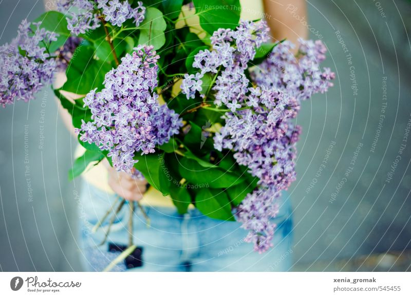 lilac Dessert Summer Sun Nature Plant Spring Beautiful weather Warmth Flower Leaf Blossom Foliage plant Agricultural crop Wild plant Garden Park Blossoming