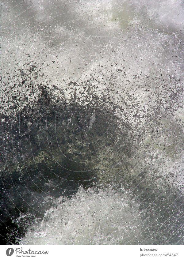 Water Jump Waves Wild animal Drops of water River Refreshment Foam Inject Hop Liquid Melt water
