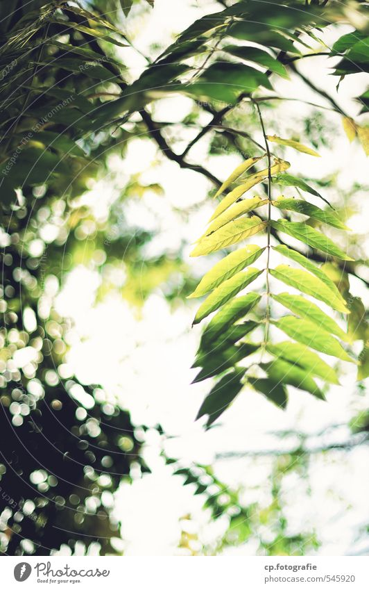 sun dance Plant Summer Beautiful weather Tree Leaf Park Forest Warmth Green Day Shallow depth of field