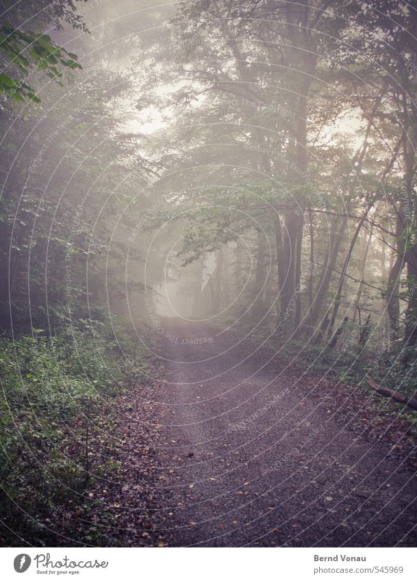 Green White Plant Tree Calm Black Forest Autumn Lanes & trails Grass Gray Brown Fog Bushes Perspective Future