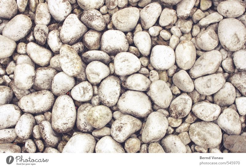 White Black Gray Stone Bright Lie Brown Round Flat Hard Spotted