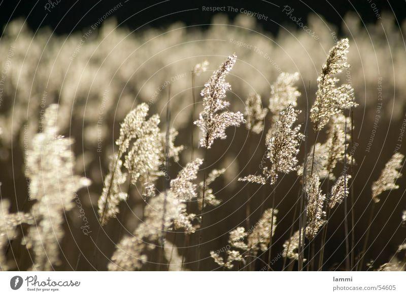Nature Sun Calm Loneliness Grass Baltic Sea National Park