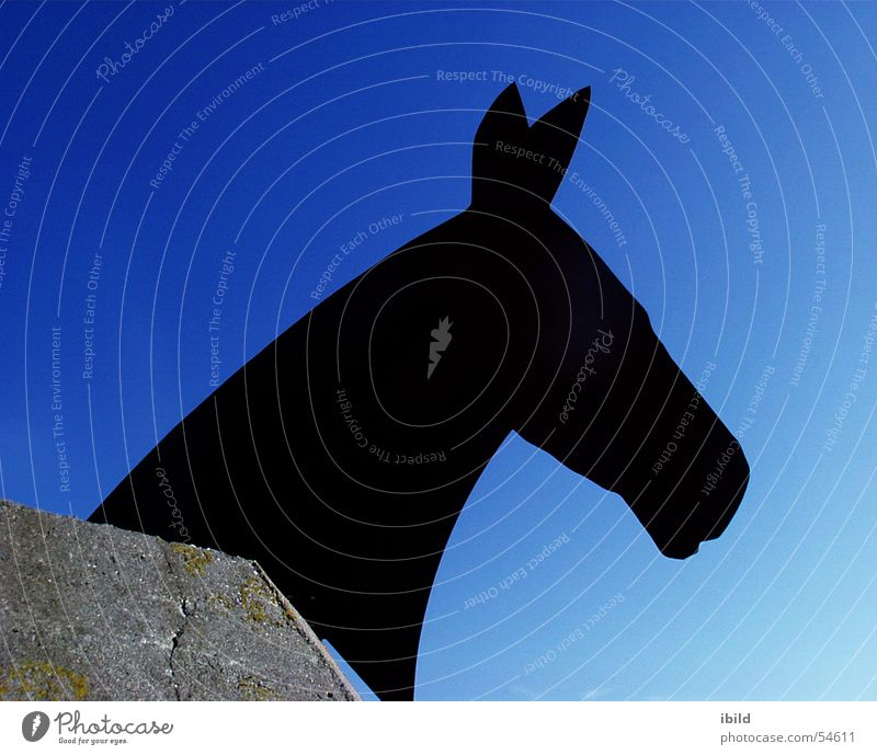 Sky Blue Black Horse Dugout