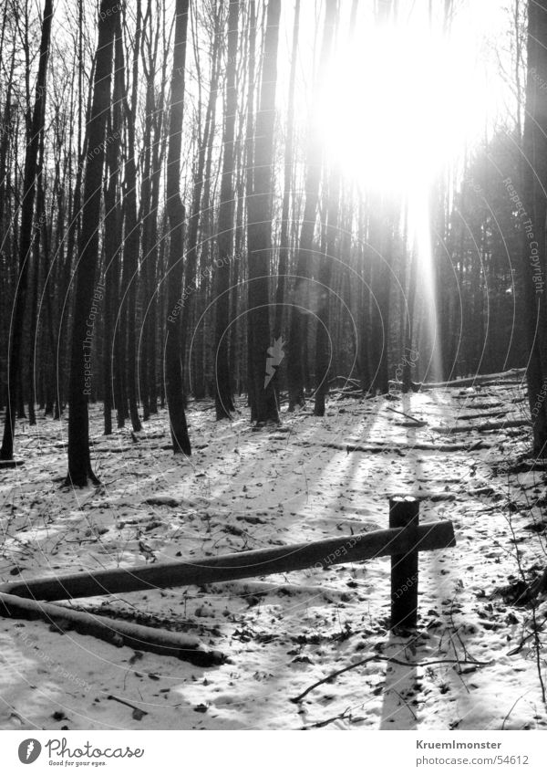 Tree Sun Winter Forest Cold Gate Nature Urban forest