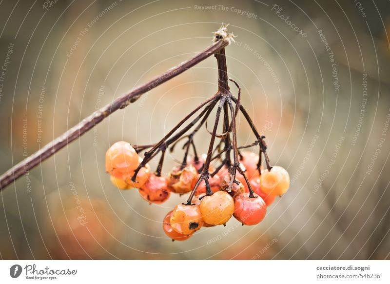Nature Plant Loneliness Sadness Autumn Small Natural Brown Orange Beautiful weather Broken Transience Round Branch Grief Near