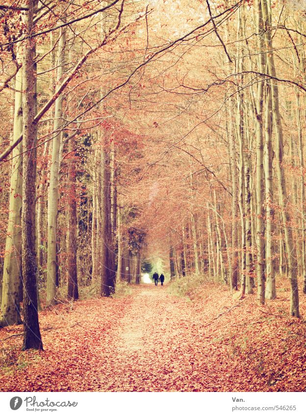 autumn Human being 2 Nature Plant Autumn Tree Leaf Forest Lanes & trails Footpath Yellow Red To go for a walk Colour photo Subdued colour Exterior shot Day