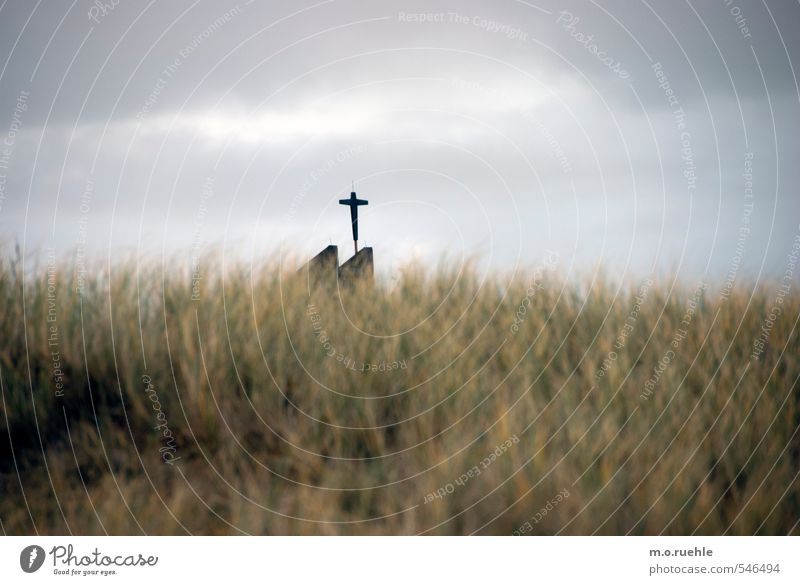 cross and grass Vacation & Travel Tourism Trip Far-off places Beach Environment Nature Landscape Bad weather Wind Grass Bushes Wild plant Coast North Sea