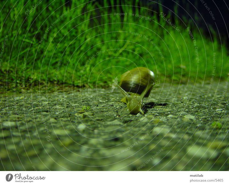 snail Snail Snail shell