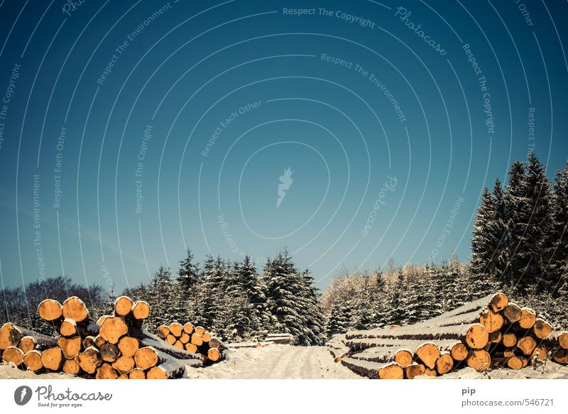 (fo)rest Winter Sky Cloudless sky Beautiful weather Snow Tree Fir tree Spruce Forest Footpath Blue Tree trunk Woodcutter Logging Oberbergischer district