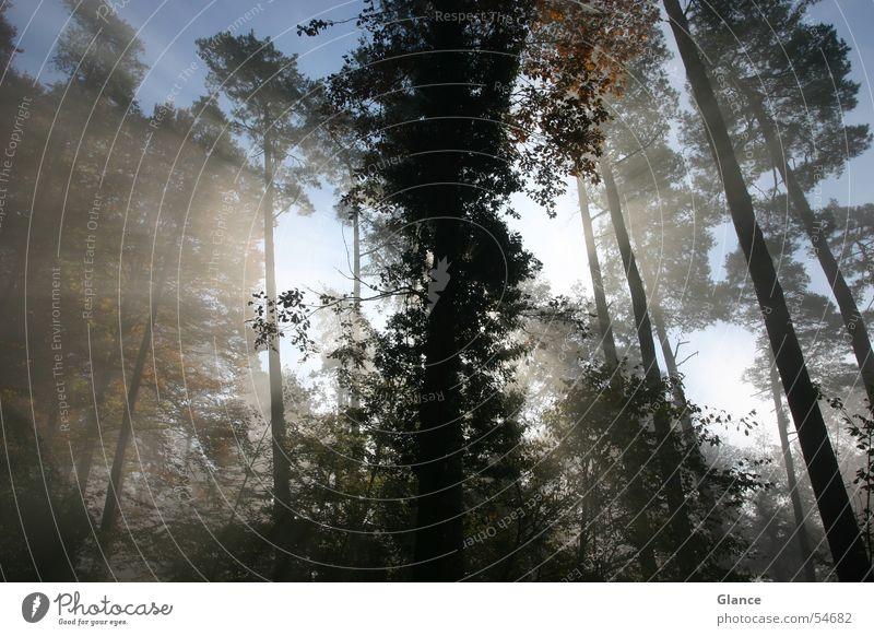 shine Forest Back-light Sun Sunbeam Tree