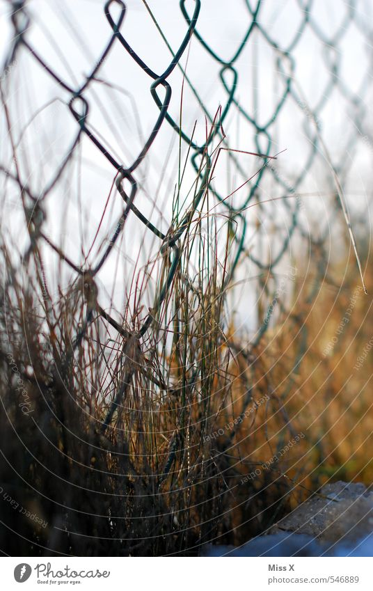 At the fence Garden Autumn Winter Grass Faded To dry up Growth Gloomy Brown Wire netting Feral Overgrown Rust Fence Metalware Snow Colour photo Exterior shot