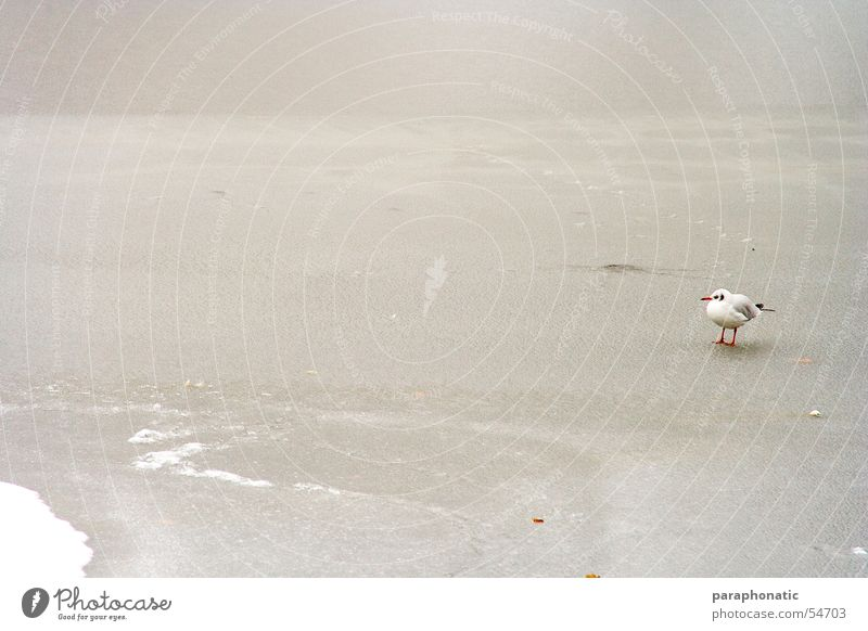Lonely Bird Cold Mud Frozen Park Winter Lake Kingfisher Loneliness Grief Exterior shot Ice Snow River Single