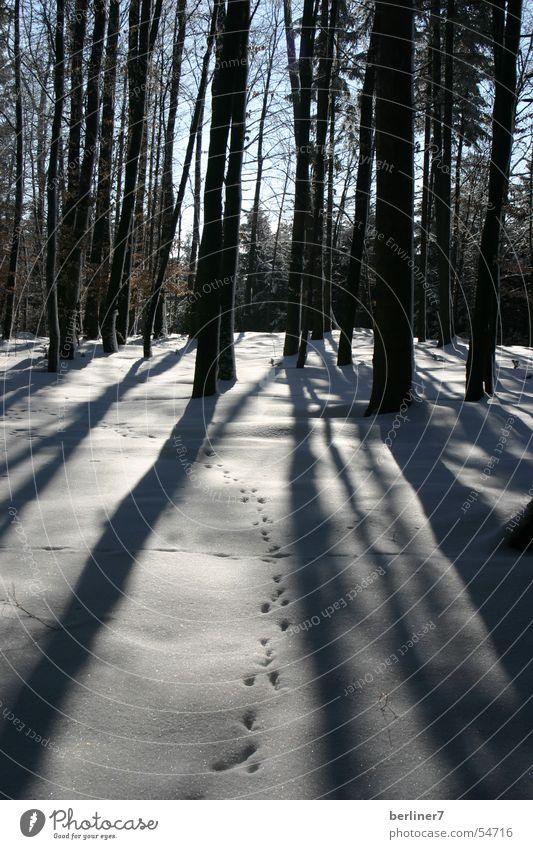 winter walk Forest Tree Spruce Back-light Branch Shadow long shadows Sun Snow sky. blue