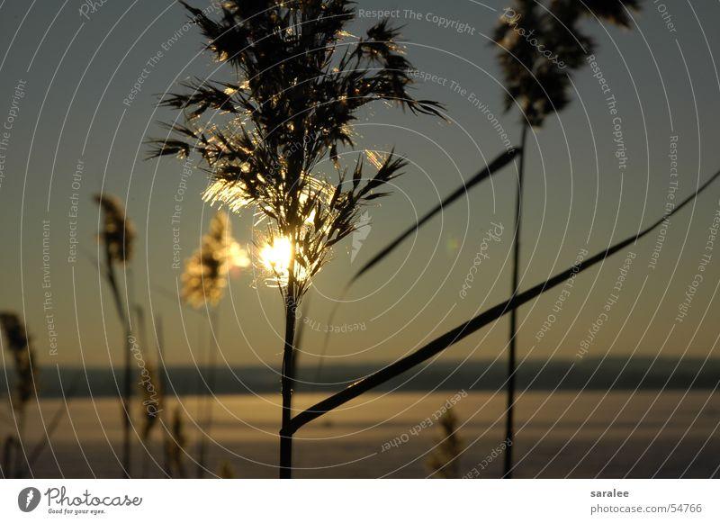 Nature Beautiful Sun Winter Calm Cold Lake Moody Blaze Romance Longing Frozen Common Reed Bavaria Untouched
