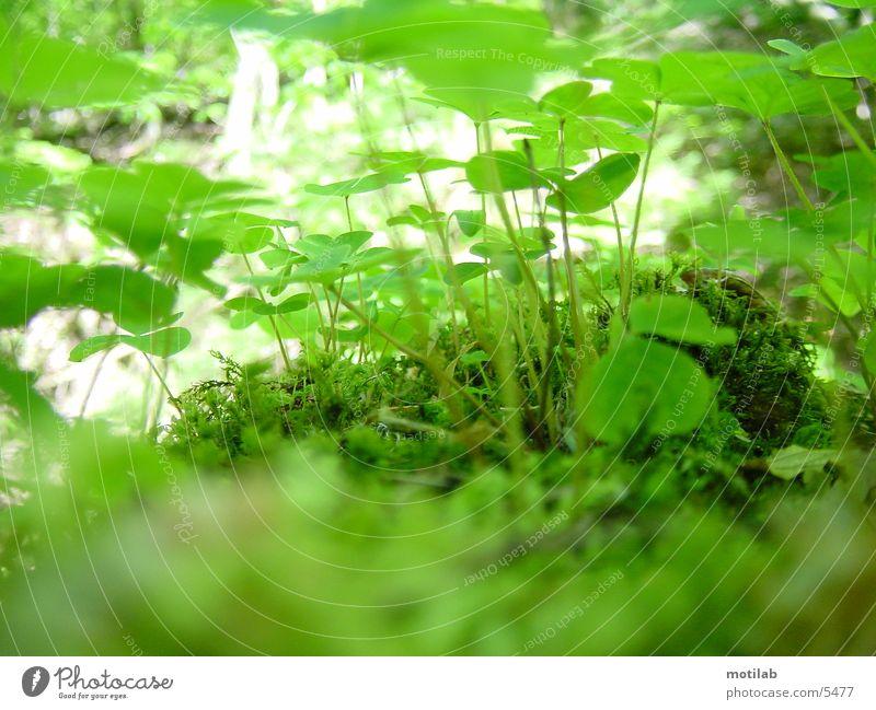 Green Clover Flower