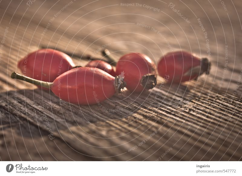 Plant Healthy Eating Red Autumn Healthy Wood Brown Fruit Contentment Illuminate Harvest Tea Berries Thanksgiving Rose hip Fruit tea