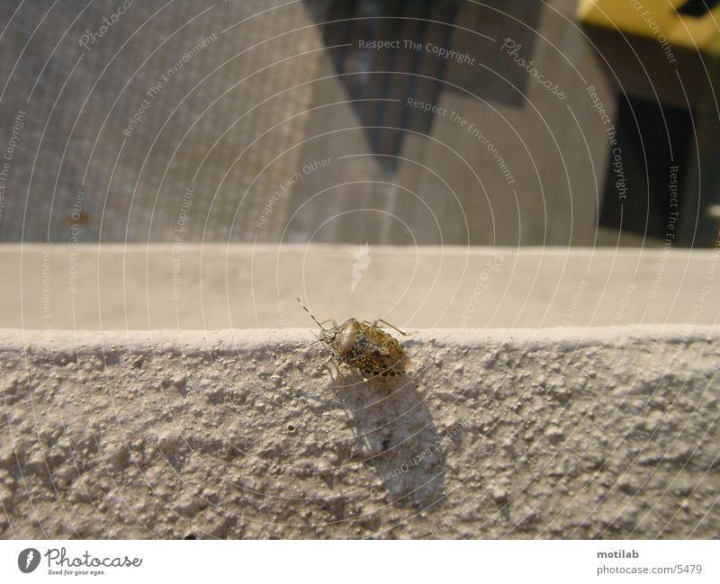 Beetle Bow